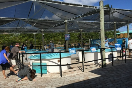 Trips + Giggles Favorite Places: Loggerhead Marine Life Center