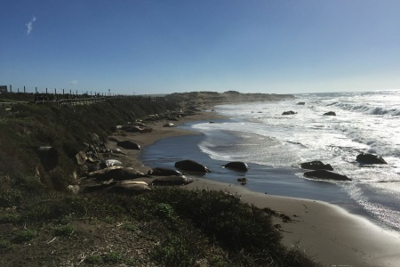 The Elephant Seal Rookery: A Must-Stop for Kids When Driving Up The California Coast