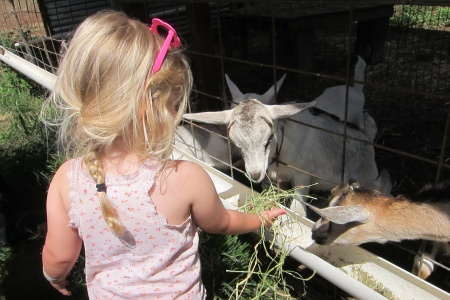 Trips + Giggles Favorite Places: The Surfing Goat Dairy Farm on Maui